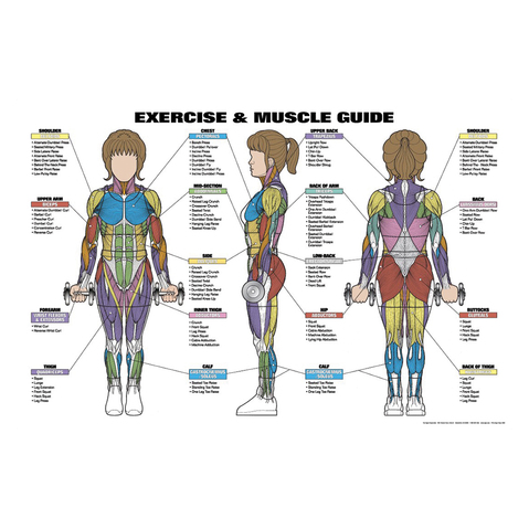 Complete Women's Exercise & Muscle Guide Poster at ELIVATE™