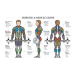 Exercise & Muscle Guide for Men at ELIVATE™