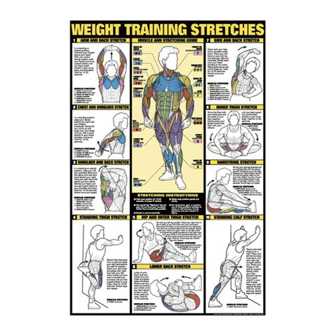 Weight Training Stretches Chart at ELIVATE™