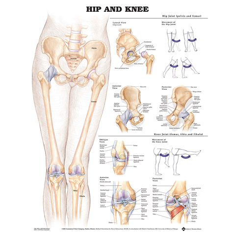 Hip & Knee Chart & More at ELIVATE™